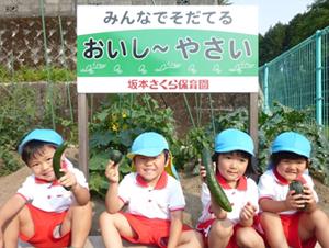 野菜の収穫5