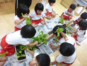 野菜の収穫7
