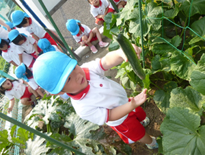 野菜の収穫1