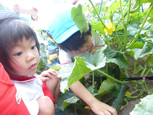 野菜の収穫4