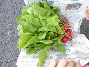 野菜の収穫8